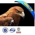 quente 3d eagle fotos lenticular 3d egale fotos