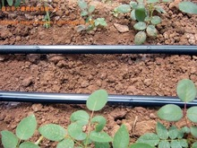 Fengba Brand Plastic Drip Pipe For Agriculture Irrigation