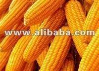 Fresh Tropical Corn