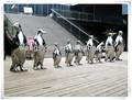 popular de arte moderna do pinguim escultura em aço inoxidável