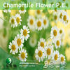 Halal&Kosher Food/Medical Grade Supplement Pure Chamomile Essential Oil/100% Natural Chamomile Extract Powder