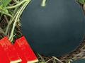 Ekimden çekirdeksiz Karpuz tohumları Hybrid siyah