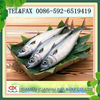 Whole Round Pacific Mackerel Sale For Tuna Bait &long Liners