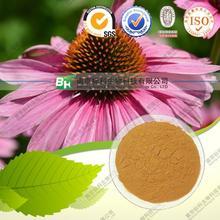 Echinacea herb extract/Echinacea purpurea Extract/Echinacea extract