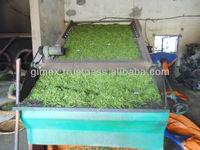 Selling sweet taste OP Green Tea 2014