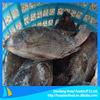 frozen tilapia wholesale tilapia whole fish