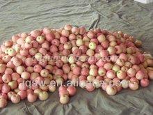 China fresh sweet Fuji Apple red apple