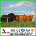 Clôture électrique pour les bovins