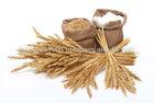 Wheat Gluten exporter