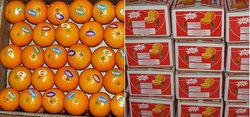 Mandarin/ Kinnow/ Orange Citrus