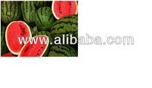 WATER MELON/seedless watermelon/honey water melon,