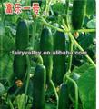 Semis/germer vos graines de concombre- hybride f1 concombre semences pour la vente
