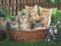 2014 3d chat, photos. avec cadre, l'impression lenticulaire