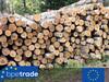 Birch logs, round wood
