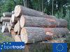 Oak logs, round wood