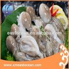 frozen octopus for sale,seafood octopus,baby octopus