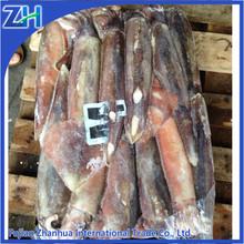 frozen illex squid producer in argentina