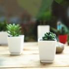 3 inches squared mini pot plant
