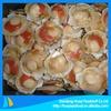 Frozen hokkaido scallop sea scallop