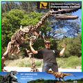 Mi- dino de alta calidad de fósiles de dinosaurios de muestra de exportadores