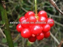 pure schisandra p.e/ Chinese magnoliavine fruit extract