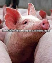 Indian frozen pork meat/white pork meat/whole pork frozen meat