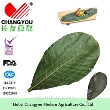 dried decorative branchs magnolia officinalis leaf