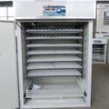 electrónico checken incubadora de huevos utilizado para