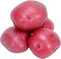 rote kartoffel hochwertige