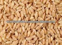 Bulk Wheat, Milling Wheat Product