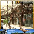Mi- dino carnotaurus espécimen fósil