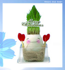 Baby Message Magic Egg Growing Flower and Grass Plant