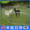 anping jinbiao brand large scale steel pipe horse fence