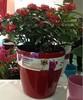 self-watering round plastic garden pot supplier