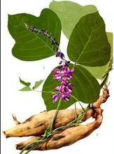 Kudzu seeds , Natural Kudzu Root Extract