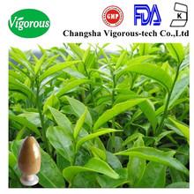 Oolong tea Extract /natural oolong tea extract/Organic oolong tea extract powder