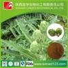 Factory supply jerusalem artichoke extract powder