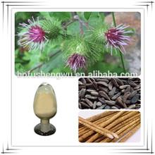 great burdock root extract powder/burdock achene extract/high quality burdock extract