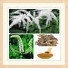 black cohosh extract triterpene glycosides/black cohosh pe/pure natural black cohosh extract