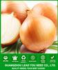 AON012 Huangguo f1 hybrid yellow onion seeds price