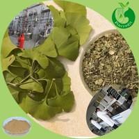 100% natural ginkgo biloba leaf ginkgo biloba extract