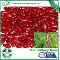 Alta calidad plana forma de frijol rojo para India mercado