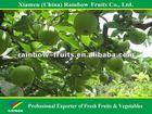 Fresh green apple new crop