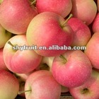 Offer fresh gala apple (hot gala apple)