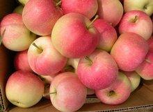 buy gala apple fruit /2014 gala apple in bulk wholesale apple fruit