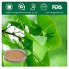Top Quality,Pure Natural Gingko Biloba Extracts Powder