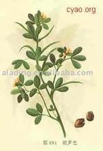 Fenugreek extract / Codonopsis Pilosula Extract 50% Total Saponin