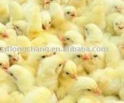 EMULSIFIER--Poultry feed additve