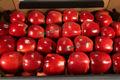 Fresh maçãs gala, lobo, campeão, cortland, jonagold, jonagored, gloster, idared