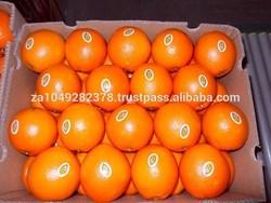Fresh Citrus fruits, fresh lemons, freash navel and valencia oranges
